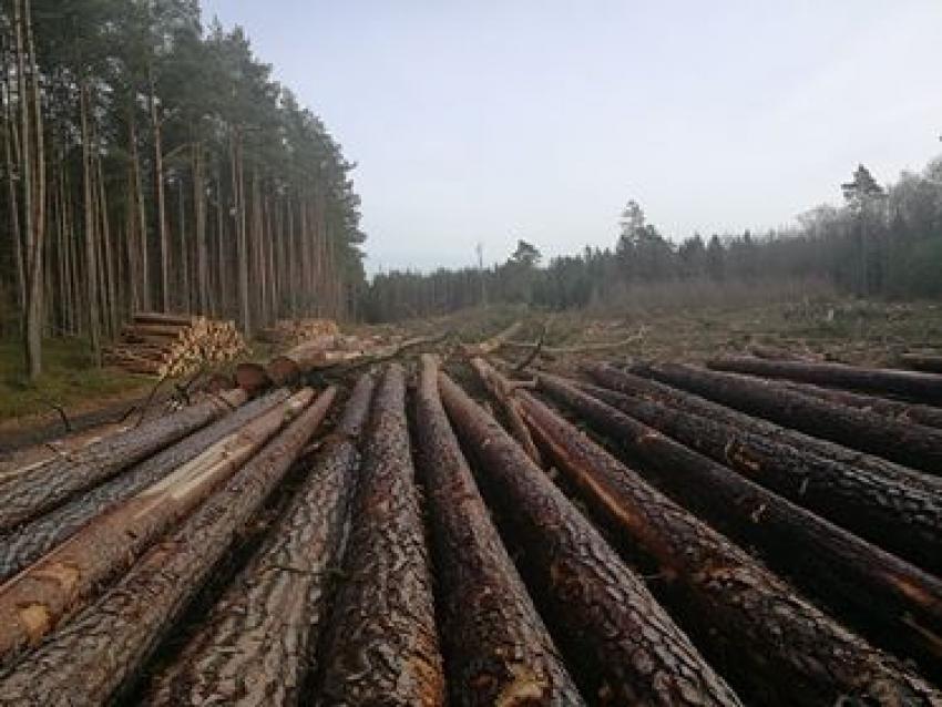 Wycięte drzewa. Zniszczona ścieżka. Nadleśnictwo odpowiada.